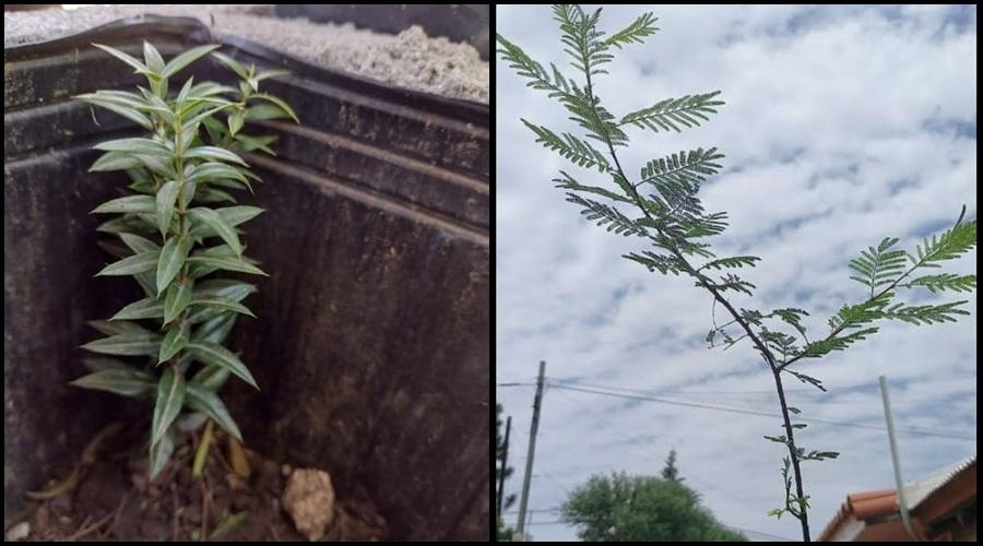Árboles Nativos en Mendiolaza